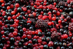 Forest fruits. A heap of defrozen currants, blackberries, blueberries Royalty Free Stock Image