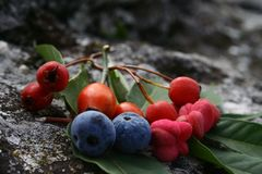 Forest fruits stock photography