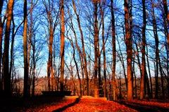 Forest Full delle foglie di caduta immagini stock libere da diritti