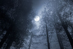 Forest full moon Stock Images
