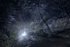 Forest in a full moon night. As seen from below Royalty Free Stock Photography