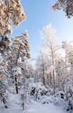 Forest full of snow Stock Photography