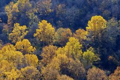 A forest full of yelow autumn colors. Stock Photography