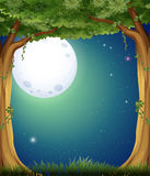 Forest and fullmoon Royalty Free Stock Photos