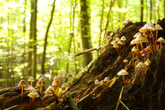 Forest fungi Stock Images