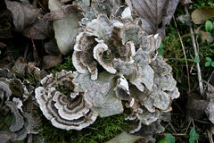 Forest Fungus Photo stock