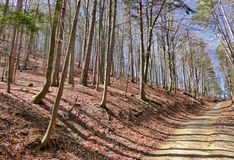 Forest in Gaderska dolina, Slovakia Stock Photos