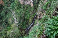 Forest in Garajonay National Park, La Gomera Stock Photography