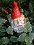 Forest or Garden Gnome Royalty Free Stock Image
