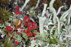 Forest garden with lichens Royalty Free Stock Images