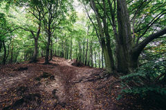 Forest in Gdansk Stock Images