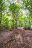 Forest in Gdansk Royalty Free Stock Image