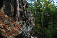 Forest Geology. Rocky terrain and vegetation of northern Michigan Stock Photos