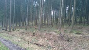 Forest. A Forest in Germany Royalty Free Stock Photography