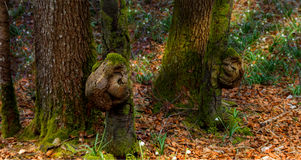 Forest ghosts Royalty Free Stock Images