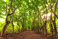 Forest of the Gili Trawangan, Indonesia. Royalty Free Stock Images
