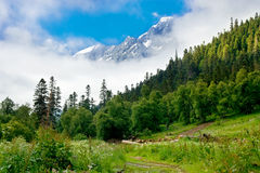 Sunny forest in the misty mountains Stock Photo