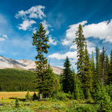 Forest glade in Banff National Park Royalty Free Stock Photo