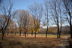 Forest glade with bare trees Royalty Free Stock Photography