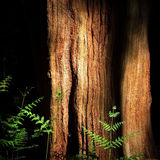 Forest Glade - Epping UK. A gnarled ancient tree deep in the forest catches a shaft of sunlight in a fern-filled glade Royalty Free Stock Images