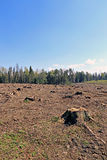 Forest glade after the felling of trees Stock Photo