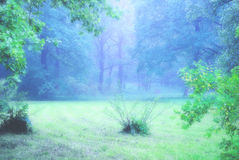Forest glade on a foggy day Stock Photos