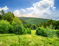 Forest glade on hillside Royalty Free Stock Images