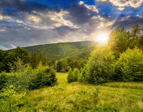 Forest glade on hillside at sunset Stock Photography