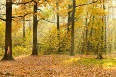 Forest glade illuminated by sunbeams in Stock Photography