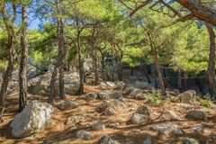 Forest Glade with large stone among the fallen needles. Rocky clearing in a pine forest an a sunny day stock photo
