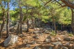Forest Glade met grote steen onder de gevallen naalden Stock Foto