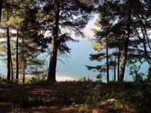 Forest Glade mit Seeansicht Stockfotos