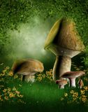Forest glade with mushrooms. And flowers Stock Photo