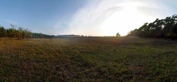 Forest Glade och solnedgång royaltyfria foton