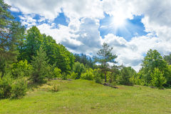 Forest glade Stock Images