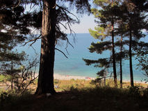 Forest Glade with sea view Royalty Free Stock Photo