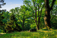 Forest glade in  shade of the trees Stock Photography