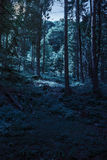 Forest glade in  shade of the trees at night Royalty Free Stock Images