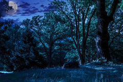 Forest glade in  shade of the trees at night. Forest glade in the cool shade of three oak trees on a hot summer night in  full moon light Stock Photo