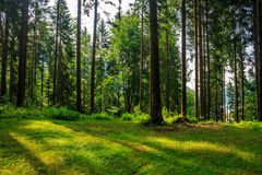 Forest glade in  shade of the trees Royalty Free Stock Image