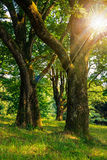 Forest glade in  shade of the trees in sun rays Stock Image