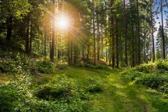 Forest glade in  shade of the trees in sunlight Stock Photos