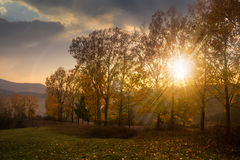 Forest glade in  shade of the trees at sunset Royalty Free Stock Photo
