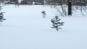 Forest glade with a small pine tree in the snow in winter. Forest glade with a small pine tree in the snow in winter stock video footage