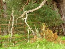Forest Of Glen Tanar stockfoto