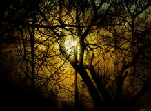 Forest glow Royalty Free Stock Photo