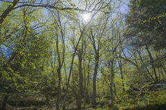 Forest Glows In The Sunshine Royalty Free Stock Photography