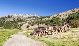 Forest of Granada Stock Images