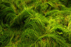 Forest grass. View of shiny forest grass Stock Photo