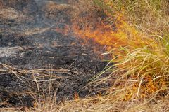 Forest grass burns with green leaves, leaving only the black ashes royalty free stock photography